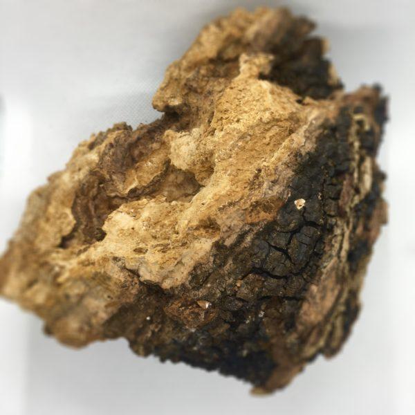 A raw chunk of chaga