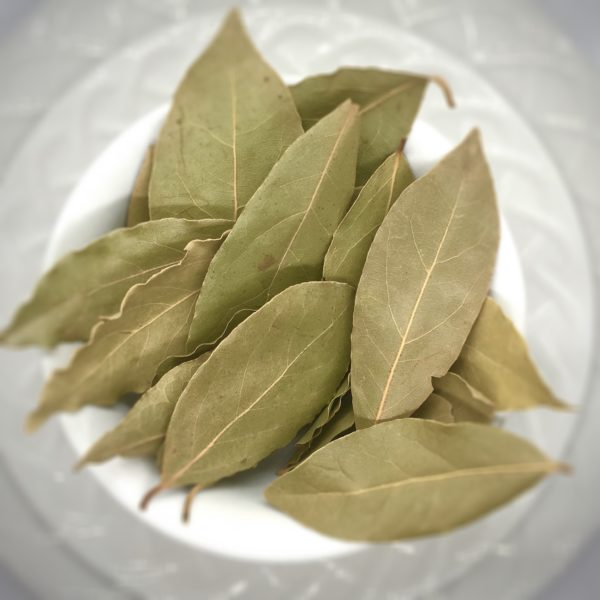 Bay Leaf - Laurus nobilis - IMG_2926
