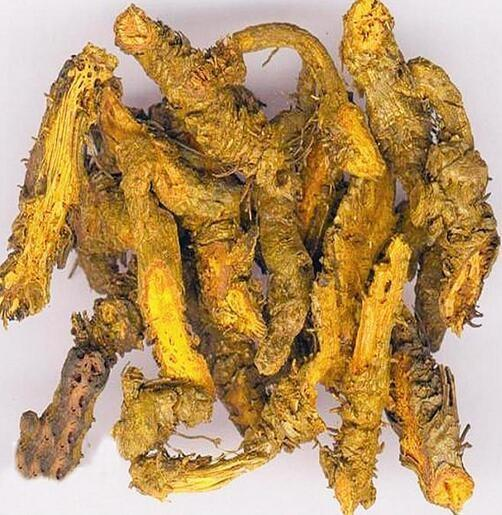 Coptis chinensis Root