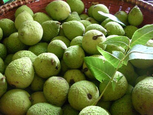 black walnut green hulls